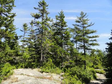 pines295